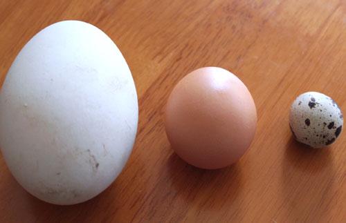 Trứng ngỗng không phải là 'thần dược' cho bà bầu