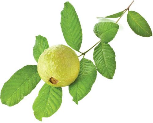 9Boiled-guava-9994-1437122183.jpg
