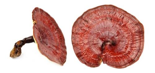 giavithaomoc anh 04 linhchi 7484 1437442884 Các loại gia vị và thảo mộc ngăn chặn lão hóa nhahanghanoi.vn