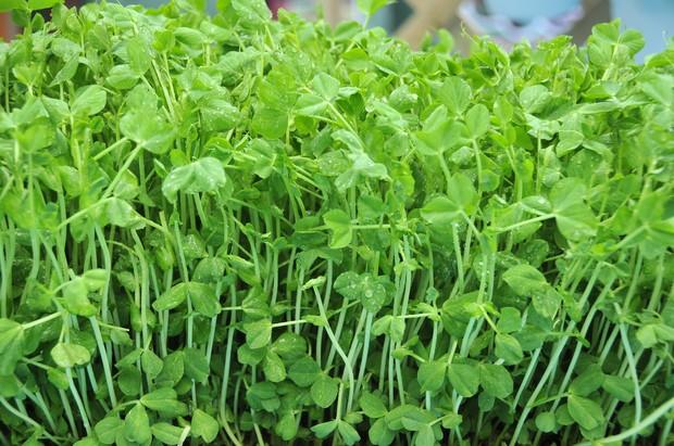 shutterstock 139947556 big 9378 1437704640 8 loại rau củ nên ăn để tăng cơ bắp nhahanghanoi.vn