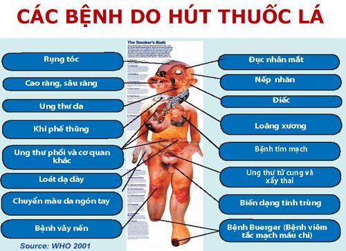 cac-benh-do-hut-thuoc-la-6674-1438246856