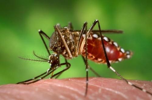 viet-nam-truy-tim-virus-zika