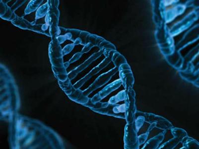 [Chia sẻ]-5 xét nghiệm bắt buộc nên kiểm tra trước lúc kết hôn Genetictests-05-1459855942-5324-1459910394