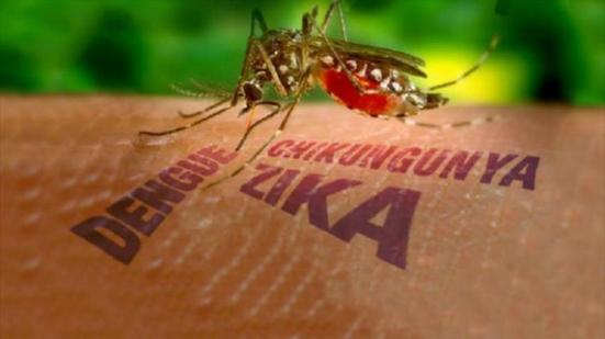 muoi-zika-dot-ban-ngay-trong-khi-nguoi-viet-chi-mac-man-ban-dem