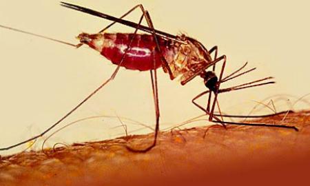 Tỷ lệ tử vong do sốt xuất huyết ở Đông Nam Á giảm mạnh