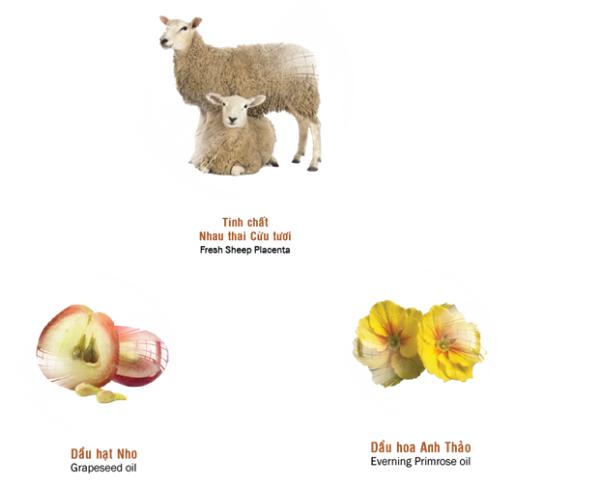 Sản phẩm chứa nhau thai cừu và các chất chống oxy hoá mạnh có tác dụng chống lão hoá da.