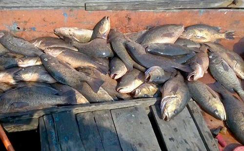 Lấy mẫu cá 4 tỉnh miền Trung để xét nghiệm 'có thể ăn được không'