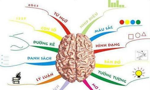 Bài kiểm tra 'luôn đúng' bạn thuận não trái hay não phải