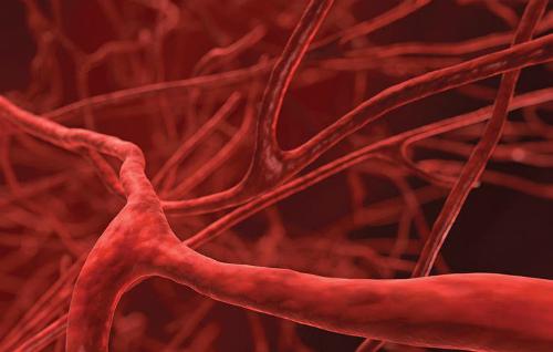 Các mạch máu giãn nở nhiều hơn khi quan hệ tình dục. Ảnh: Prevention.