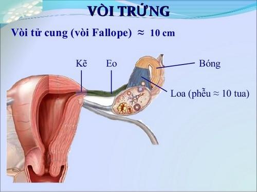 lan-dau-chua-tac-voi-trung-bang-ky-thuat-nong-noi-soi