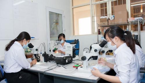 Các hoạt động trong phòng thí nghiệm để nghiên cứu quần thể muỗi tự nhiên tại TP Nha Trang. Ảnh: