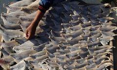 Ăn vi cá tẩm bổ coi chừng bị ngộ độc thủy ngân
