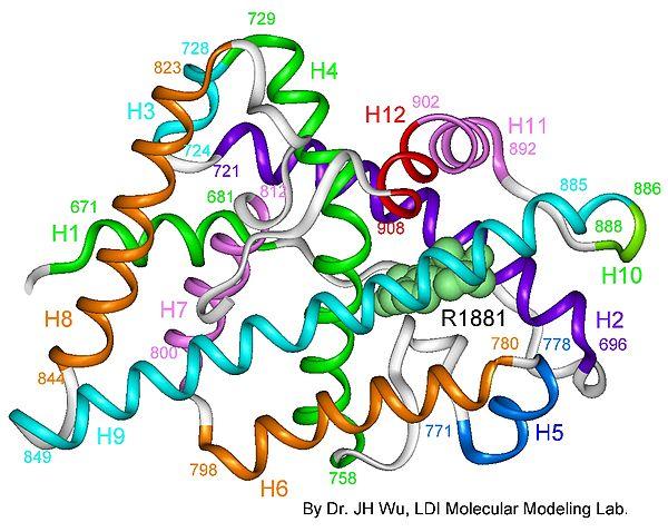 Hội chứng kháng androgen xảy ra do sự đột biến gene mã hóa cho thụ thể androgen. Ảnh: W.W.