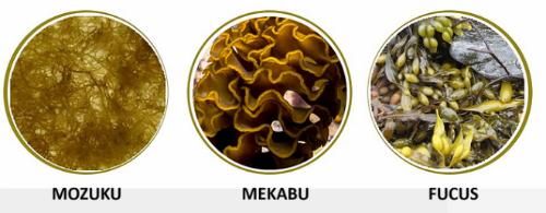 Những loại nấm, rong nâuhỗ trợ điều trị ung thư ít ai biết (bài xin Edit)