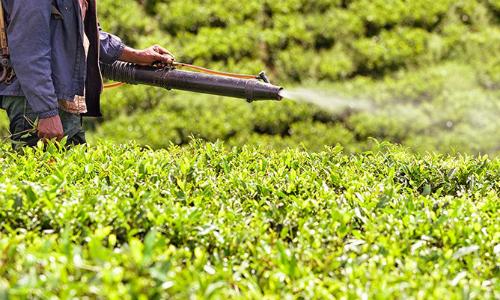 DDT từng được sử dụng tại nhiều nước, trong đó có Việt Nam. Ảnh:fmajor/istock.
