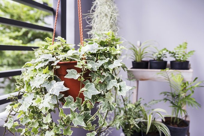7 loại cây trồng trong nhà có lợi sức khỏe