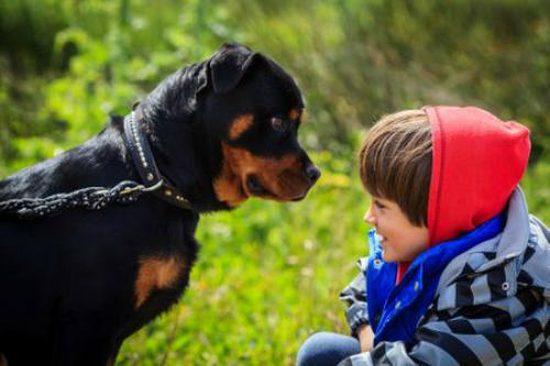 Tại sao chó thường tấn công những người cảm thấy sợ hãi?