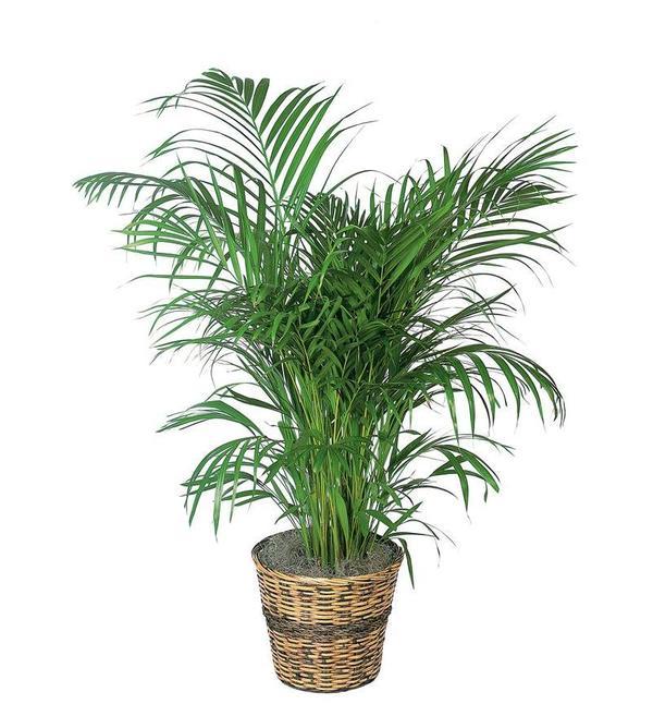 7 cây lọc không khí bạn nên trồng trong nhà