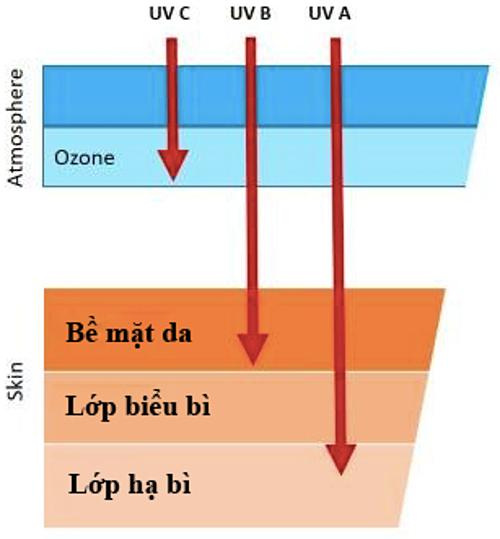 Tác động của các loại tia UV đến da.