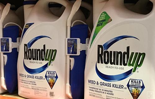 Thuốc diệt cỏ Roundup của Monsanto bị cho là gây ung thư cho người dùng. Ảnh: Reuters.