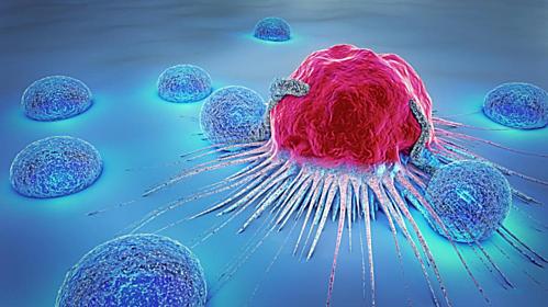 Fucoidan giúp hệ thống miễn dịch của cơ thể tiêu diệt tế bào ung thư.