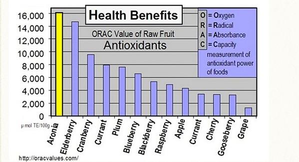 Chokeberry (Aronia) có khả năng hấp thụ gốc oxy hoặc ORAC (đo độ mạnh chống oxy hóa của các mặt hàng thực phẩm) là 16.062. Biểu đồ trêncho thấy sự hhấp thụ oxy hóa của Aronia. Loại quả này cũng được chọn là chất đại diện hàng đầu chống oxy hóa tại trung tâm dinh dưỡng Arkansas tại Mỹ.