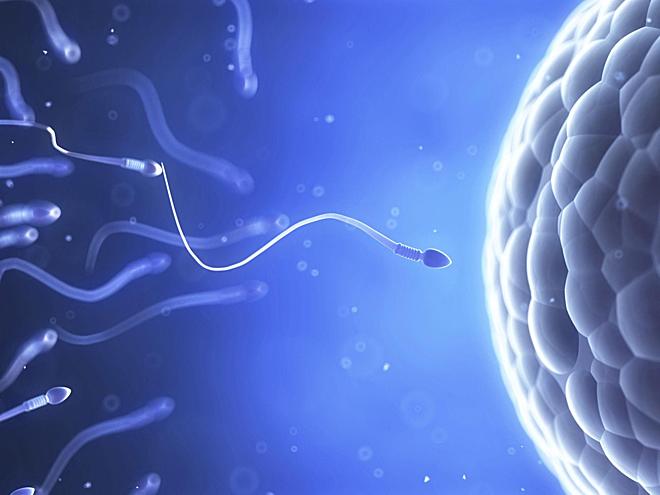 Đàn ông sản xuất hơn 2000 nghìn tỷ tinh trùng trong suốt cuộc đời và hơn 250 triệu tinh trùng trong mỗi lần xuất tinh. Ảnh: Aeon