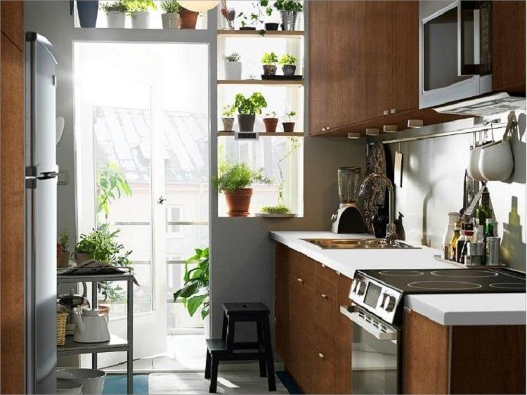 Những cây trồng hữu ích trong nhà bếp - Sức Khỏe