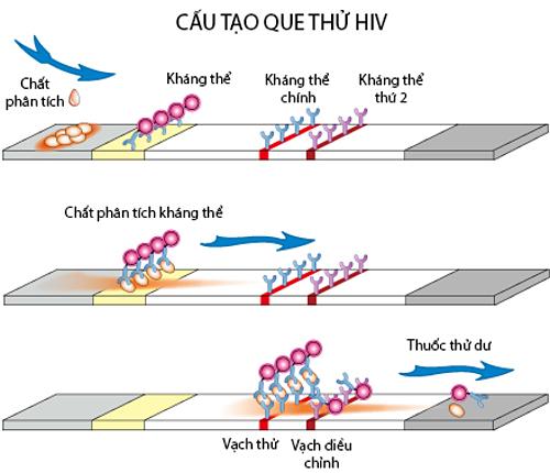 Nguyên lý hoạt động của que thử HIV