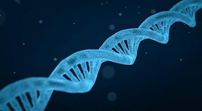 Biến thể gene SYCP2 được cho là nguyên nhân gây vô sinh ở nam giới. Ảnh: New Scientist