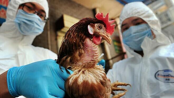 Virus H5N6 lây từ gia cầm sang người - ảnh 1