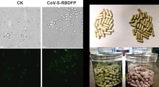 Điều chế thành công vaccine Covid-19 dạng uống - Sức Khỏe