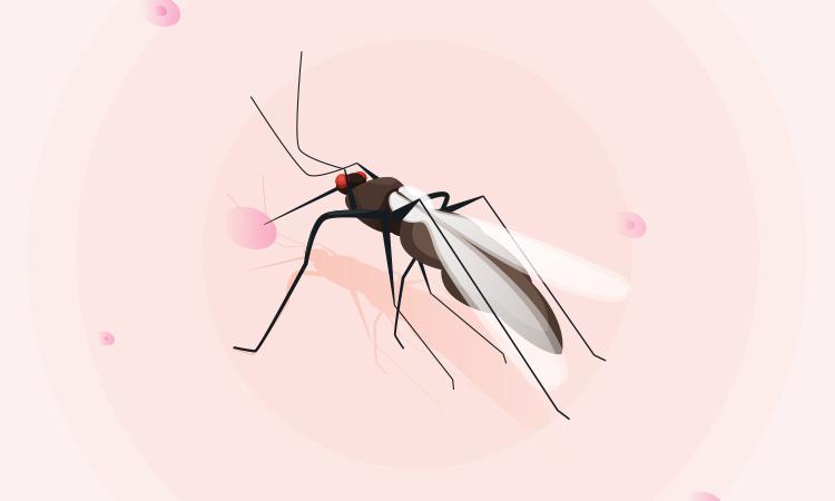 Những bệnh nguy hiểm do muỗi gây ra -